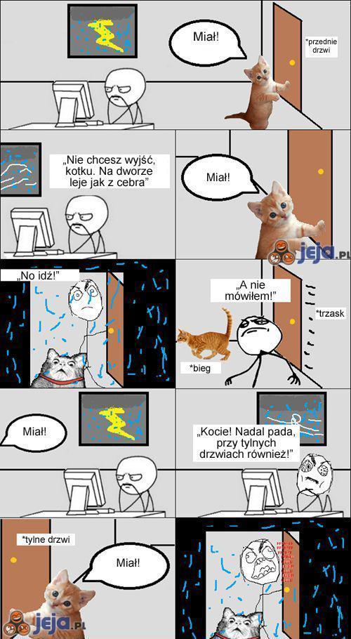 Kot podczas deszczu