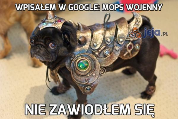 Wpisałem w google: mops wojenny