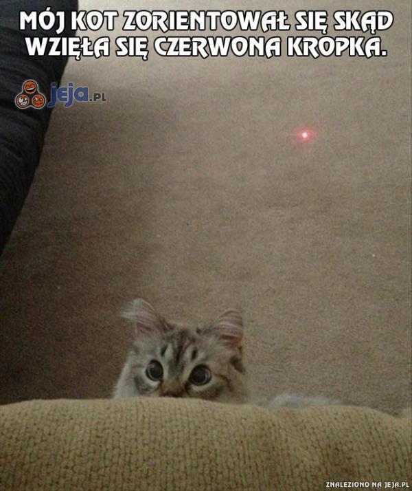 Koty ewoluują...