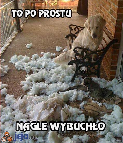 Pies i niespodziewany wybuch
