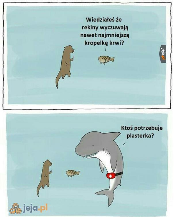Pomocny rekin