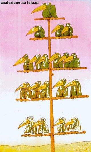 Hierarchia w społeczeństwie