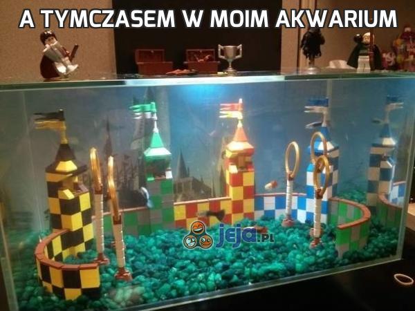 A tymczasem w moim akwarium