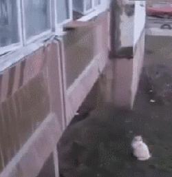 Wejście dla kota