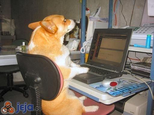 Pies przed komputerem