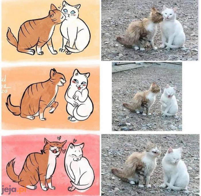 Kocia historia miłosna