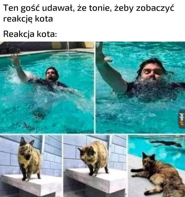 Bohaterskie zwierzę