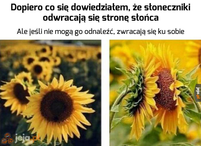 Romantyczne słoneczniki