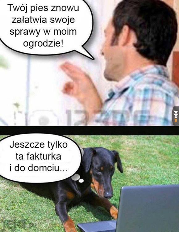 Panie, weź pan tego psa!