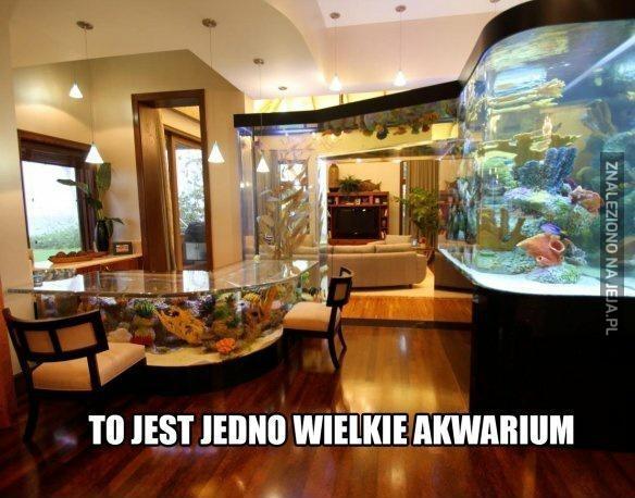 Ogromne akwarium