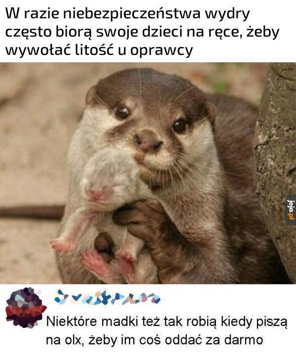 Mam horom wydre