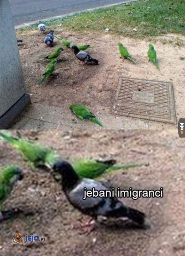 Imigranty wszędzie