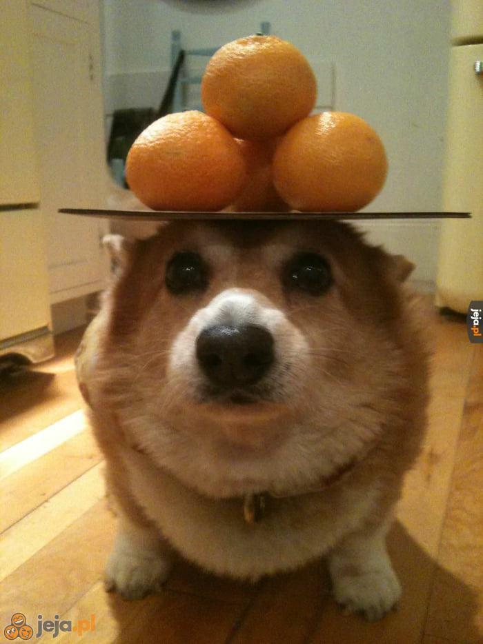 Psi balans