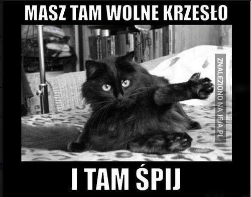 Kot, mój pan