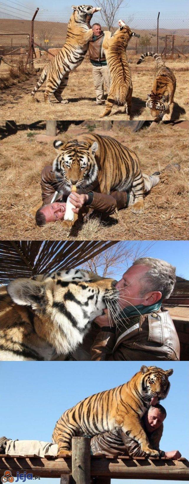 Obcujący z tygrysami