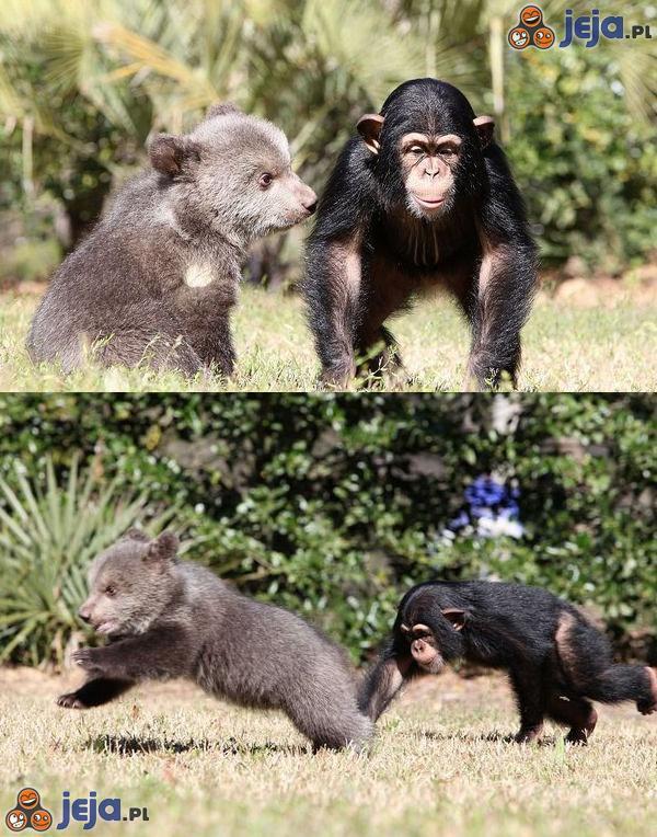 Nietypowa przyjaźń