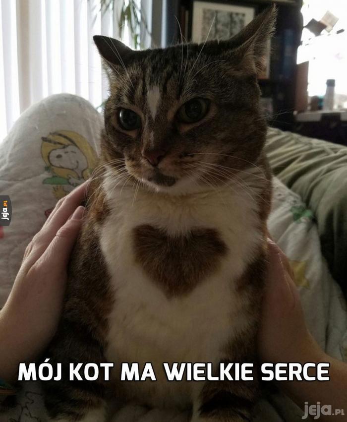 Kot miłosny bywa zazdrosny