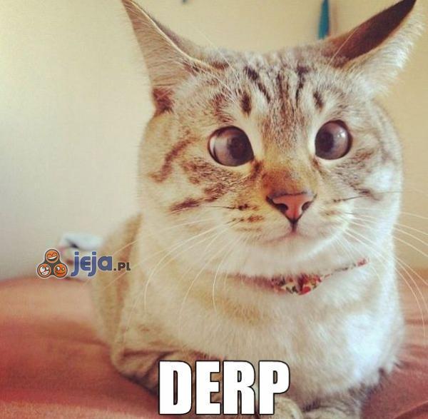 Ej, koteł, co z tobą?