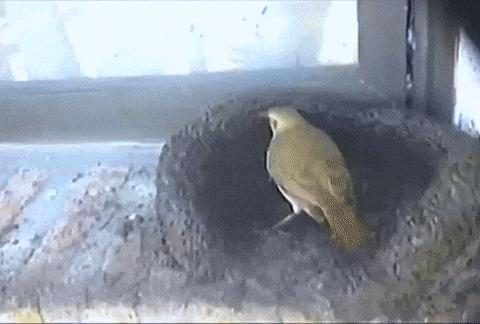Jak powstaje gniazdo