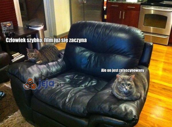 Koty kinomany
