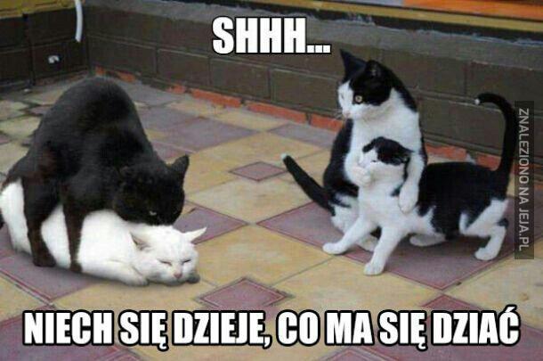 Co te koteły?