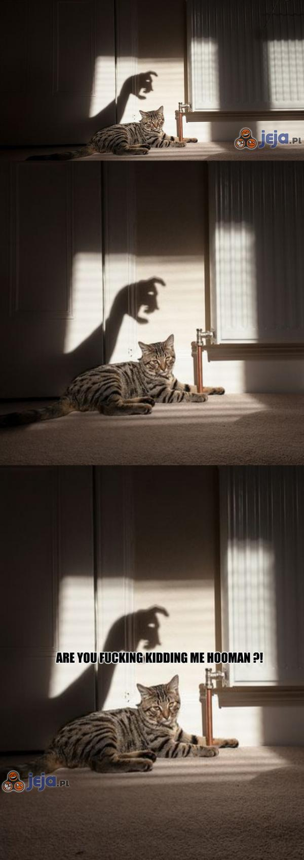 Niewzruszony kot