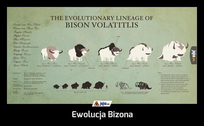 Ewolucja Bizona