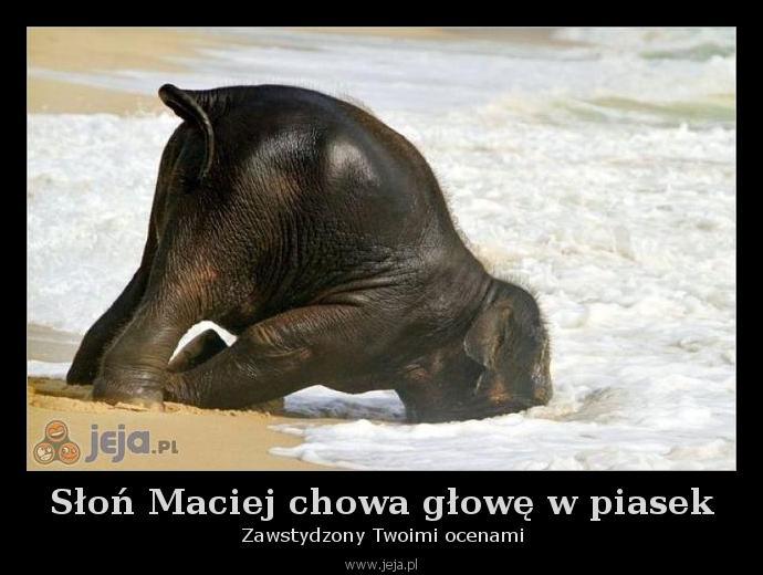 Słoń Maciej chowa głowę w piasek