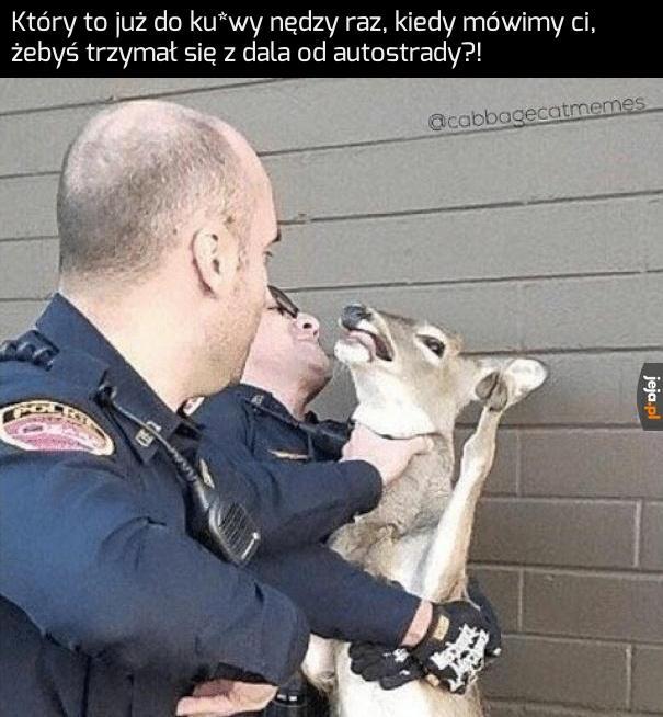 Żarty się skończyły, jeleniu