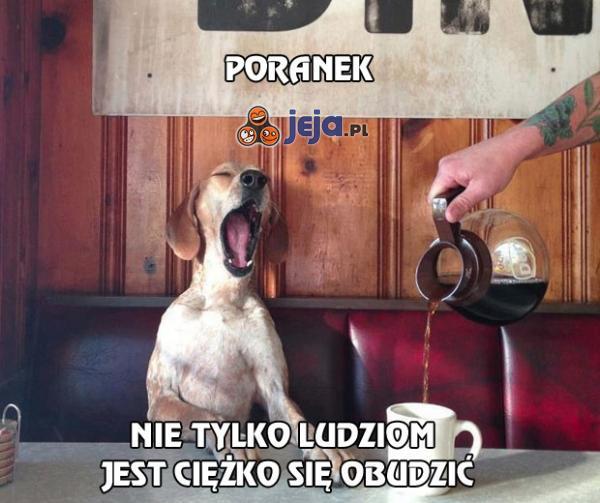 Poranek psa