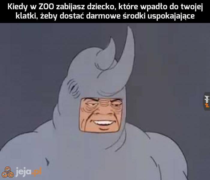 Warto być nosorożcem