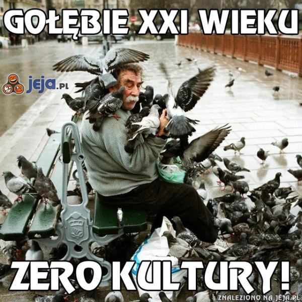 Gołębie XXI wieku