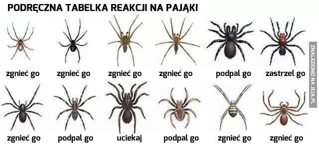 Poradnik: jak postępować z pająkami