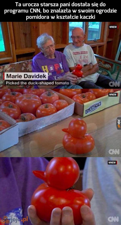 Kaczorek pomidorek