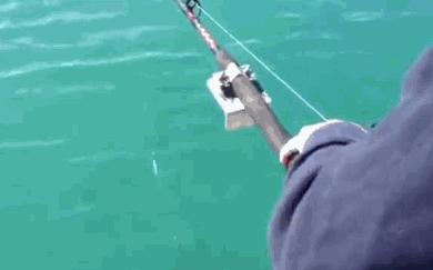 Tymczasem na rybach