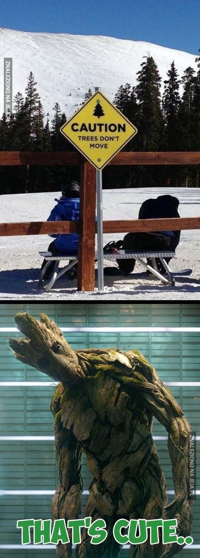Drzewa się nie ruszają, ta?