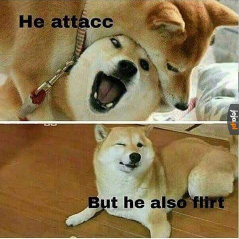 Pieseł atakuje i flirtuje