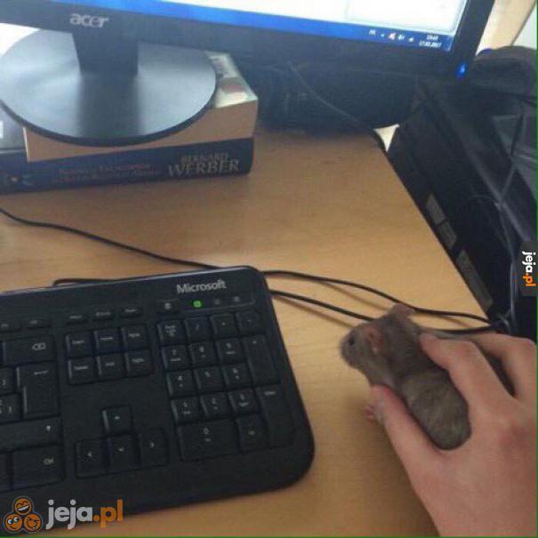 Moja myszka nie działa, jakieś rady?