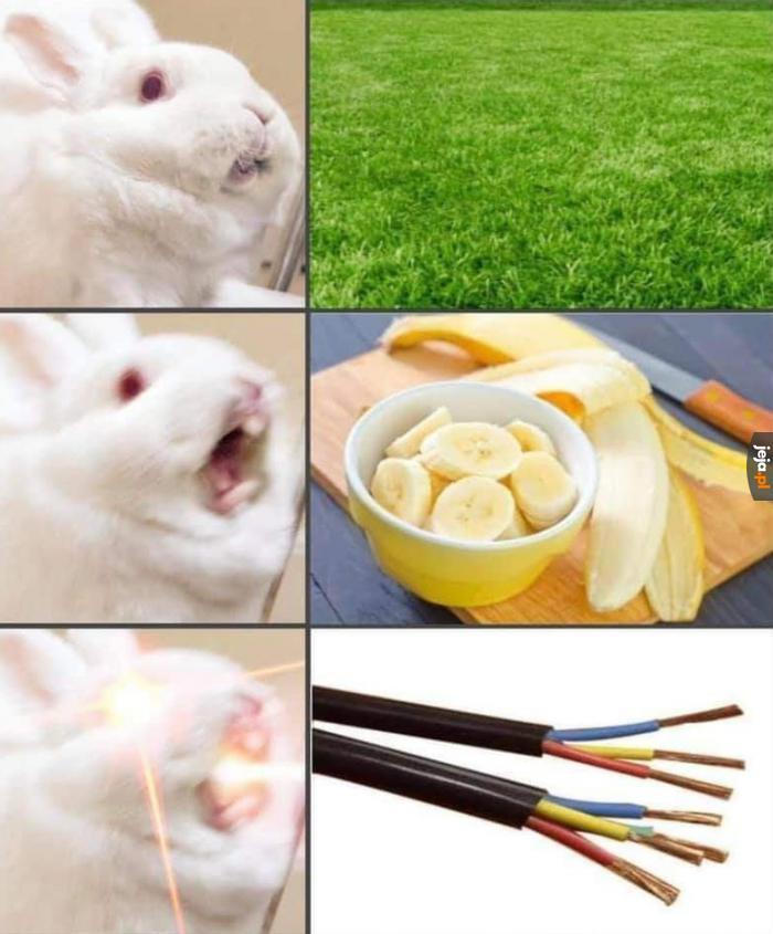 Logika królików