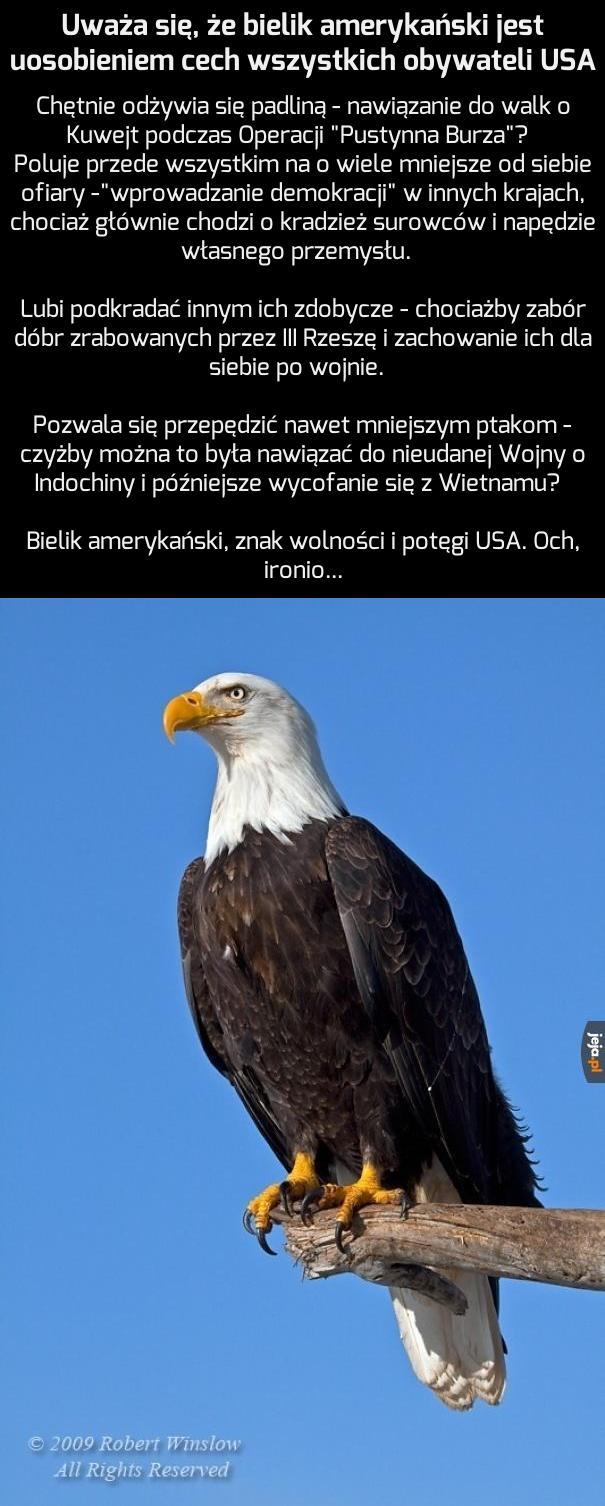 Bielik amerykański - duma USA