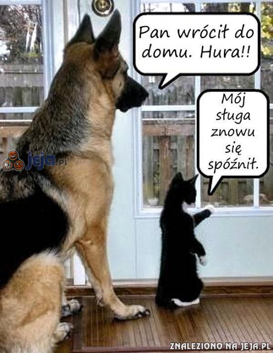 Różnica między kotem i psem
