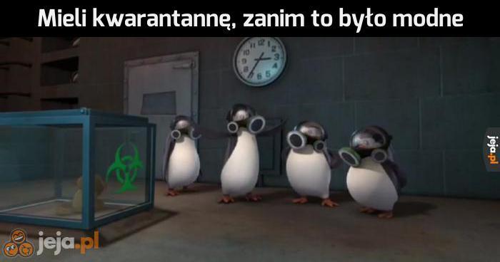 Pingwiny, najlepsza bajka dzieciństwa