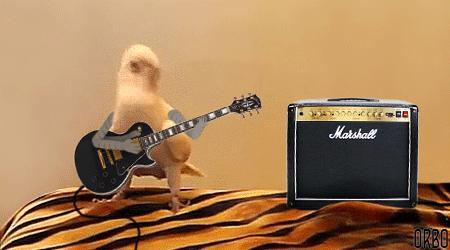 Rockowa papuga
