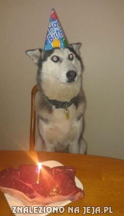 funny happy birthday dog cake-#15