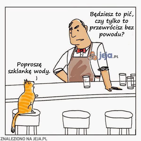 Kot wchodzi do baru