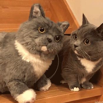 Kot akceptuje swoją podobiznę