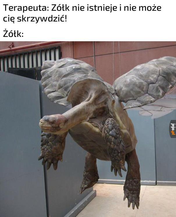 To w Czarnobylu są żółwie?