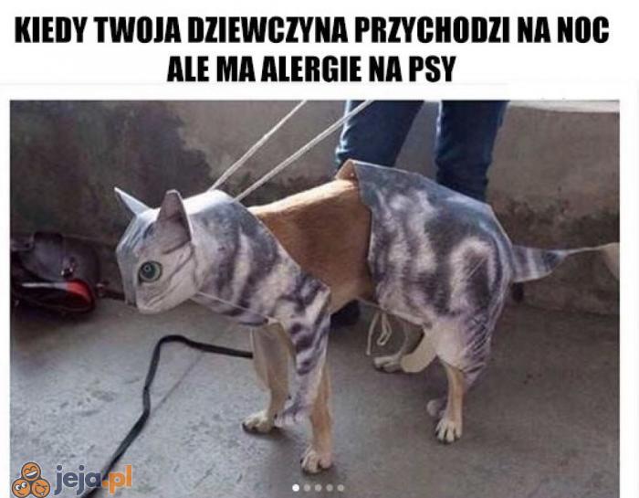 Poznaj Puszka!