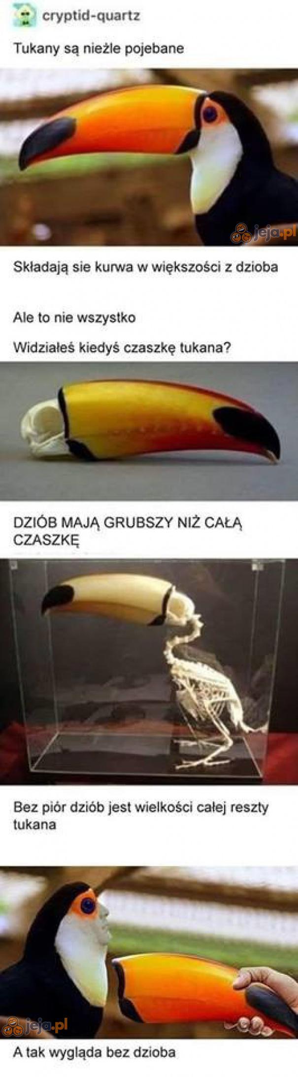 Dziwne ptactwo