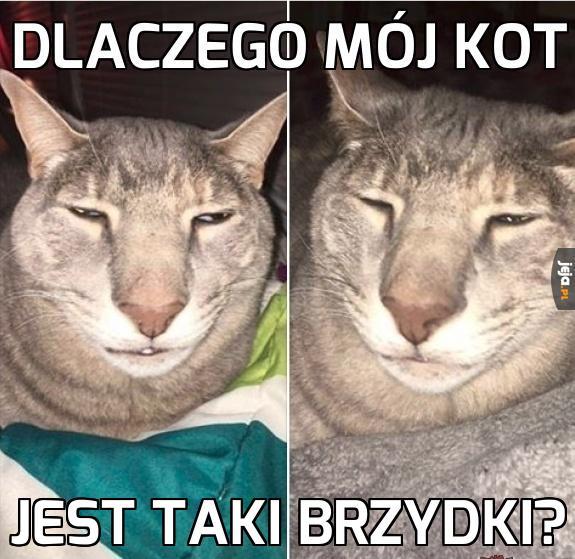 Czy to jeszcze kot?